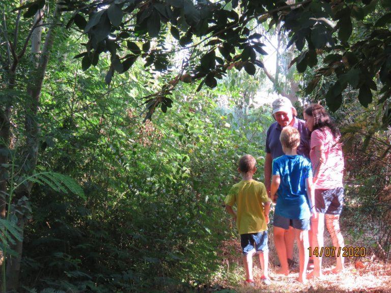 טיול וקטיף משפחתי ביער