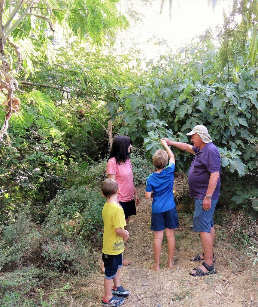 סבא ונכדיו מלקטים פירות ביער מאכל
